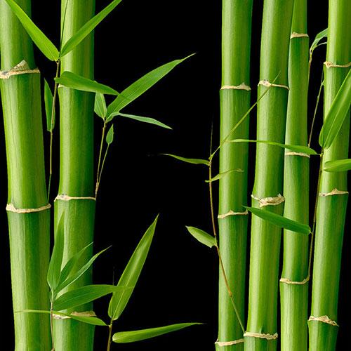 Yodeyma Bambus